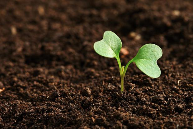 Seeding Projects to Change the World